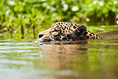 JAG 02 MC0002 01