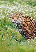 JAG 02 RK0024 03
