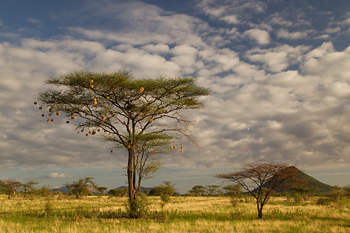 LAN 01 MC0010 01