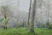 LAN 01 MH0009 01