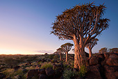 LAN 01 MH0119 01