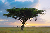 LAN 01 MH0144 01
