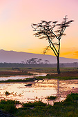 LAN 01 MH0147 01
