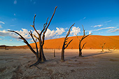 LAN 01 MH0155 01