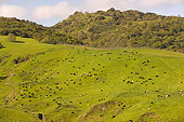 LAN 03 RK0062 01