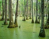 LAN 07 GR0003 01