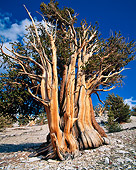 LAN 07 GR0012 01