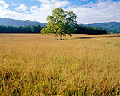 LAN 07 GR0016 01