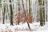 LAN 08 JE0024 01