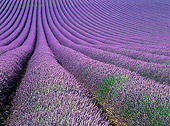 LAN 08 KH0018 01