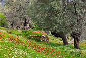 LAN 08 KH0049 01