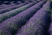 LAN 08 KH0052 01