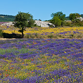 LAN 08 KH0054 01
