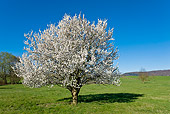 LAN 08 KH0070 01
