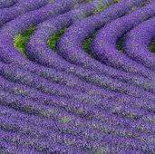 LAN 08 KH0100 01