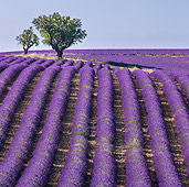 LAN 08 KH0102 01