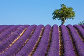 LAN 08 KH0103 01