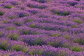 LAN 08 KH0107 01