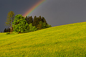 LAN 08 KH0136 01