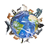 LAN 09 KH0020 01