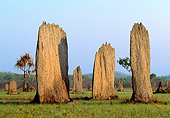 LAN 09 MH0008 01