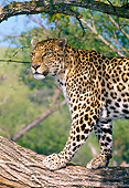 LEP 10 GL0001 01