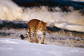 LEP 10 RF0006 01