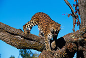 LEP 10 RK0056 05