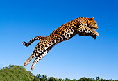 LEP 10 RK0063 05