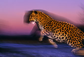 LEP 10 RK0081 06