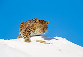 LEP 10 TK0001 01