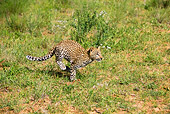 LEP 20 GL0001 01