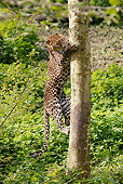 LEP 20 GL0004 01