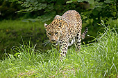 LEP 20 GL0005 01