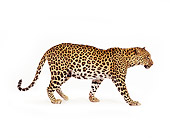 LEP 20 RK0034 11