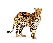 LEP 20 RK0035 02