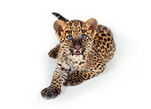 LEP 20 RK0124 03