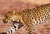 LEP 20 RK0007 03