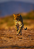 LEP 20 RK0036 15