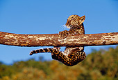 LEP 20 RK0113 17