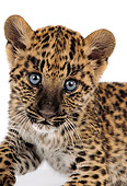 LEP 20 RK0121 01