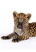 LEP 20 RK0121 06