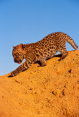 LEP 20 RK0127 18