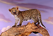 LEP 20 RK0136 05