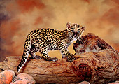 LEP 20 RK0142 02