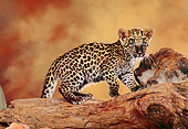 LEP 20 RK0142 07
