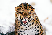 LEP 20 TL0001 01