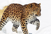 LEP 20 TL0004 01