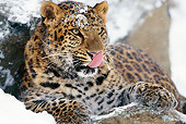 LEP 20 TL0005 01