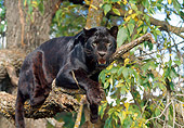 LEP 30 BA0001 01